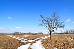 Oak Near Snow Roads Stock Photo
