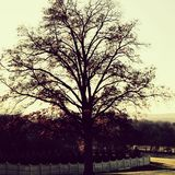 Oak. New York Nature Royalty Free Stock Images