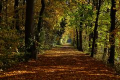 Oak parkway in autumn royalty free stock image