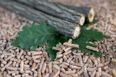 Oak pellets and wood. Tree sticks oak wood, leaves and pellets made of such materials stock images