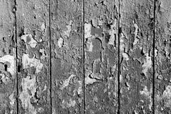 Oak planks background Stock Image