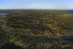 Oak plantation. Aerial view in Huelva,  Andalusia, Spain Royalty Free Stock Photos