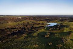 Oak plantation. Aerial view with lake Stock Image