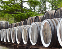 Oak port wine barrels Stock Photography