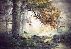 Oak ree in autumn Stock Photo