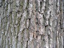 Oak rind Stock Images