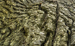 Oak rind abstract texture Stock Photos