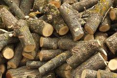 Oak round logs Royalty Free Stock Photo