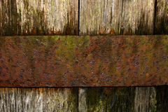 Oak and Rust stock photo