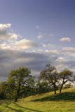 oak słońca Obrazy Stock