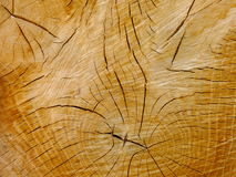 An oak's cross-section Royalty Free Stock Photography