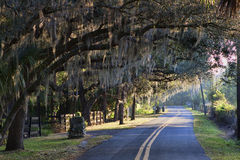 Oak Shaded Street. At sunrise.  The images shows a lightly winding Florida road with a canopy of live oak trees just after sunrise Stock Image