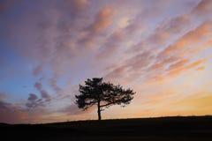 Oak silhouette Royalty Free Stock Photos
