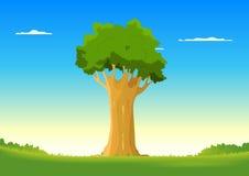 Oak In Spring Field Royalty Free Stock Image