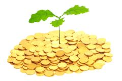Oak sprout grown from money. Royalty Free Stock Photography