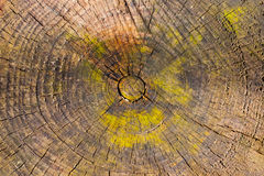 Oak stump Stock Photos