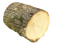 Oak stump, log fire wood isolated on white background with clipping path Stock Photos
