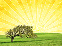 Oak Sunrise. A photo-illustration of an old oak on a textured sunrise background with radiating light rays Royalty Free Stock Photo