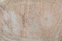Oak texture sample, inside view in the cut, across view, oak structure, hardwood Stock Photo