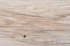Oak texture sample, inside view in the cut, lengthwise, oak structure, hardwood Stock Photography