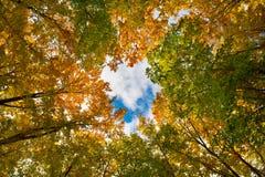 Oak thicket Royalty Free Stock Photos