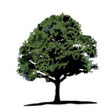 An Oak Tree. Illustration of an oak tree isolated royalty free illustration