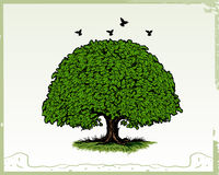 Oak Tree. Vector illustration of oak tree isolated on white backgound. Additional file format Illustrator 8 eps stock illustration