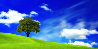 Oak tree. On green field Royalty Free Stock Images