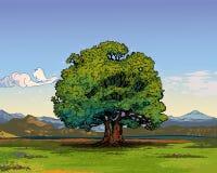 Oak tree. A single oak tree in the middle of an open meadow vector illustration