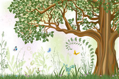 Oak tree stock illustration