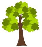 Oak tree. Big green oak tree vector illustration Royalty Free Stock Photo
