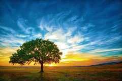 Free Oak Tree Stock Photo - 26681040