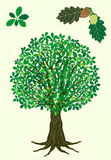 Oak tree. With fresh green treetop and detail of leaves with acorn royalty free illustration