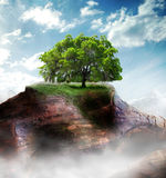 Oak tree. A large lonely oak stands alone on a desolate mountain top.  Concept for perserverence Royalty Free Stock Photography