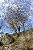 Oak tree. In rocks under blue cloudy sky royalty free stock image
