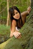 The Oak tree Stock Photography