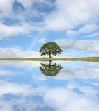 The Oak Tree Royalty Free Stock Photo