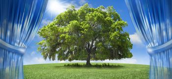 Oak tree. A large oak tree in a grassy field with a bright sunny sky.  Cloud curtains part to present the tree to the viewer.  Abstract to raise the tree to a Royalty Free Stock Photo