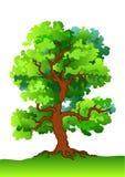 Oak tree. Isolated on white stock illustration