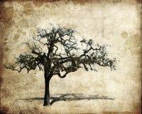 Oak tree. On a grungy background vector illustration