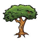 Oak tree. Cartoon illustration of an oak tree Royalty Free Stock Images