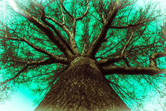 Oak tree abstract Royalty Free Stock Images