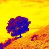 Oak tree. Abstract picture of an holm oak tree on a rocky mountain slope Stock Photography