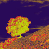 Oak tree. Abstract picture of an holm oak tree on a rocky mountain slope Royalty Free Stock Photo