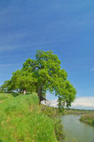 Oak Tree And River Royalty Free Stock Images