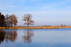 Oak tree in autumn Stock Images