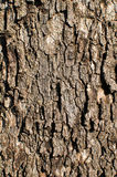 Oak Tree Background Royalty Free Stock Photos