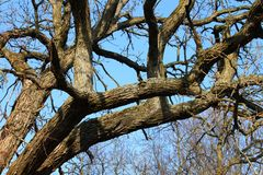 Oak Tree Background Stock Photos