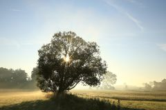 Free Oak Tree Backlit By The Morning Sun In Foggy Weather Silhouette Of A Tree On The Field At Sunrise Time In Misty Autumn Weather Royalty Free Stock Photo - 139203755