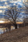 Oak tree on the bank of the river. On a sunset background Royalty Free Stock Images